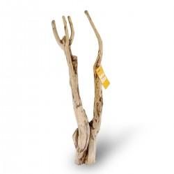 Tea Tree Branch