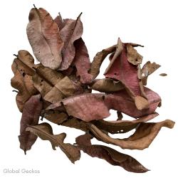 Natural Kumbuk Leaves