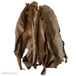 Natural Mango Leaves - Large