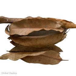 Natural Mango Leaves - Small