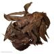 Natural Neem Leaves