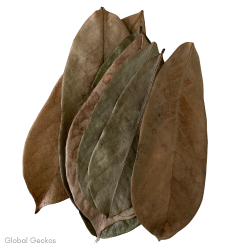 Natural Soursop Leaves
