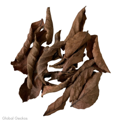 Natural Veralu Leaves