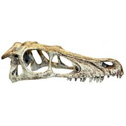 Komodo Raptor Skull