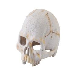 Exo Terra Primate Skull - S, M