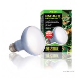 Exo Terra Daylight Basking Bulb - 75w