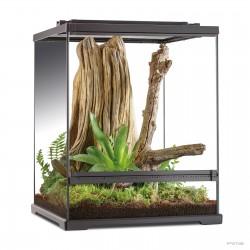 Tree Frog Terrarium - Frogs & Co