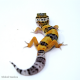 Leopard Gecko (Normal)