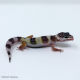 Leopard Gecko (Mack Snow Het Albino)