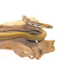 Trinket Snake - Pair