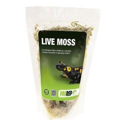 Live Moss (1.5L)