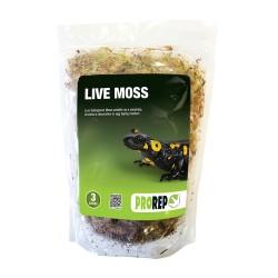 Live Moss (3L)