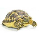 Tortoises / Turtles