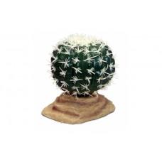 Komodo Barrel Cactus (9cm)