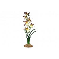 Komodo Spider Orchid (40cm)