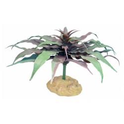 Komodo Star Cactus (13cm)