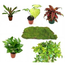 Dart Frog Enclosure Plant Bundle - Small