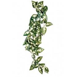 Komodo Silk Plant Borneo