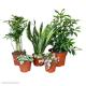 Crested Gecko Enclosure Plant Bundle - Small