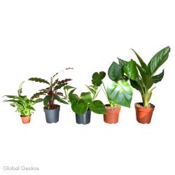 Tree Frog Enclosure Plant Bundle