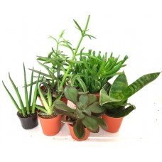 Arid Plant Bundle