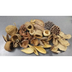Natural Seed Pods